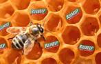 Roundup honey