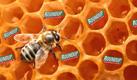 Roundup honey